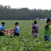 Glyphosate: ces pays où l'utilisation de ce pesticide fait débat