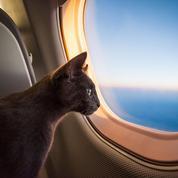 Quelles sont les compagnies aériennes les moins chères pour transporter son animal ?
