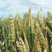 Malgré la sécheresse, les céréaliers connaissent un répit