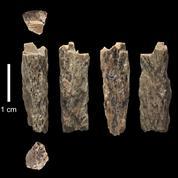 Découverte du premier métis issu de deux espèces d'hommes différentes