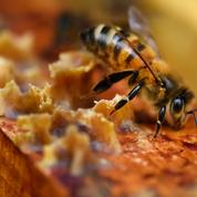 En Lorraine, un apiculteur se fait voler 400 kg de miel