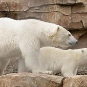 Rémi Gaillard interpelle Nicolas Hulot pour transférer deux ours d'un parc animalier