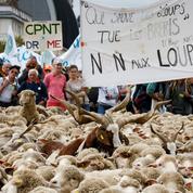 Démission d'Hulot: satisfecit quasi unanime dans le milieu agricole
