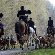 Des anti-chasse à courre attaqués en justice
