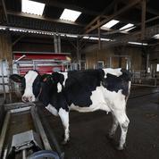 Les producteurs de lait s'inquiètent de prix toujours bas