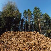 Le bois énergie est-il bon pour le climat?