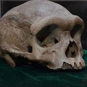 Un incroyable crâne vieux de 200.000 ans caché depuis 85 ans dans un puits en Chine