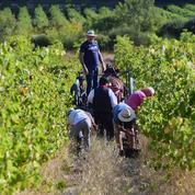 Quelle est la géographie électorale du vignoble français?