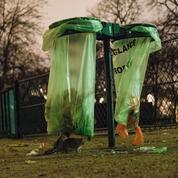 Contre les rats à Paris, une maire d'arrondissement LR fait appel au privé