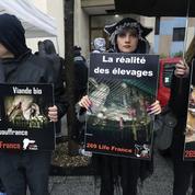 «60 millions de consommateurs» alerte sur la déplorable condition animale en élevage
