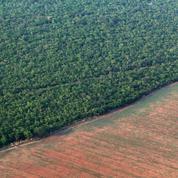 Brésil: la forêt amazonienne directement menacée par les projets de Bolsonaro