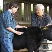 Pénurie de vétérinaires en milieu rural