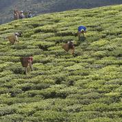 Inde : au pied de l'Himalaya, le Sikkim cherche le salut dans le bio
