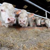 Taxer la viande plutôt que le carburant, une piste polémique