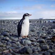 Antarctique : le plus vaste sanctuaire marin ne verra pas le jour