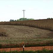La France tente de lutter contre la déforestation importée