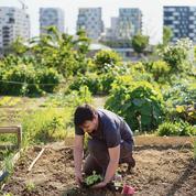 La formidable histoire des jardins collectifs et familiaux