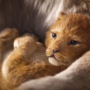 Le Roi Lion :la bande-annonce du nouveau Disney illumine la savane