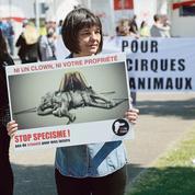 Les opposants aux cirques avec animaux se mobilisent