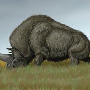 Les hommes préhistoriques ont côtoyé les licornes de Sibérie