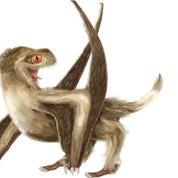 Les «dragons» préhistoriques avaient aussi des plumes