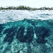 Un graffiti de corail pour sauver les récifs