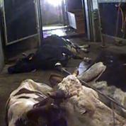 La France a bien importé de la viande de vaches malades de Pologne
