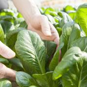 Potager: des légumes frais, vite!