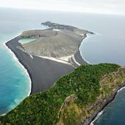 La vie s'est déjà installée sur une île apparue fin 2014 dans le Pacifique