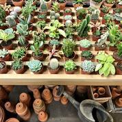 Une boutique de plantes à prix mini ouvre à Paris