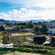 À Marseille, l'agriculture urbaine séduit les investisseurs