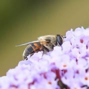Les insectes menacés d'extinction d'ici quelques dizaines d'années