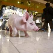 Aoste, Bigard et Herta s'engagent à soutenir les éleveurs de porcs