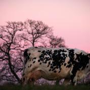 Heure d'hiver ou heure d'été? Les agriculteurs préfèrent s'aligner sur le soleil
