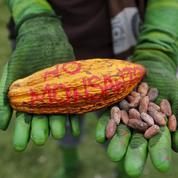 Biodiversité: le glyphosate, un ennemi parmi bien d'autres