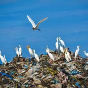La planète submergée par la croissance des déchets en plastique