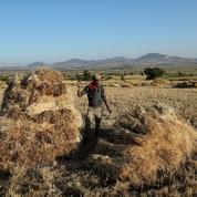 Éthiopie: quand les fermiers font les frais du développement d'Addis-Abeba