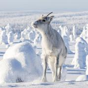 Aïlo, une odyssée en Laponie :«L'homme n'a pas le privilège de l'émotion»