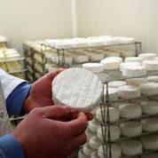 La bataille s'organise pour sauver le camembert au lait cru
