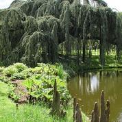 En 1881, Zola se souvient des dimanches de printemps avec son ami Cézanne