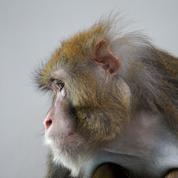 Quand des animaux de laboratoire découvrent la vie