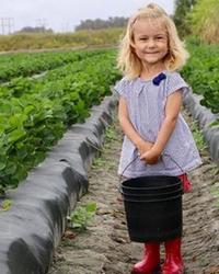 Eleanor en pleine cueillette de fraises dans une ferme de Floride, où la famille a pu camper.