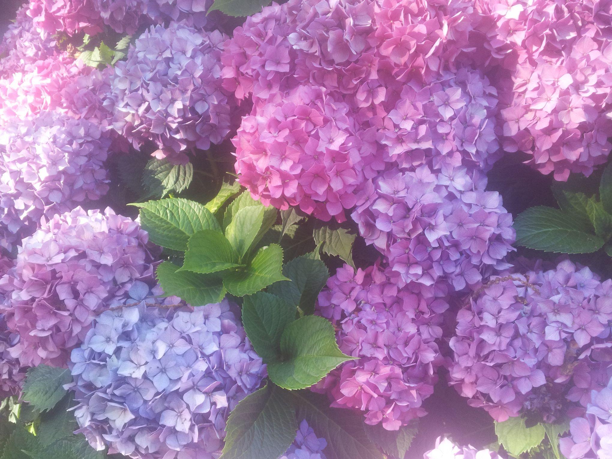 comment aider vos plantes à affronter la canicule