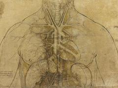 Une exceptionnelle empreinte de Léonard de Vinci retrouvée sur un dessin anatomique