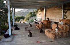 Un poste de gardien de chats à pourvoir sur une île paradisiaque rencontre un succès fou