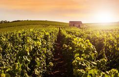 Champagne : début des vendanges précoce et prometteur