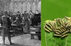 Histoire de plantes: quand les parasites étaient excommuniés