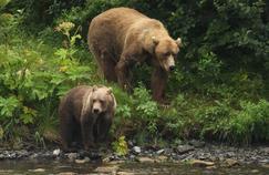 François de Rugy confirme la réintroduction de deux ourses dans les Pyrénées