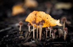 Cinq choses fascinantes que vous ne savez pas sur les champignons