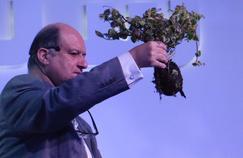 Le Polyter, une solution pour faire pousser des plantes dans le désert